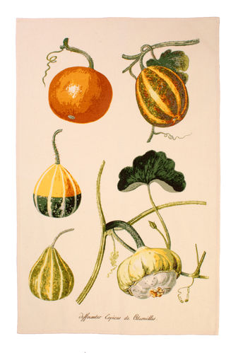 "Geschirrtuch ""Pumpkins"" RHS von Ulster Weavers. Cotton Tea Towel"